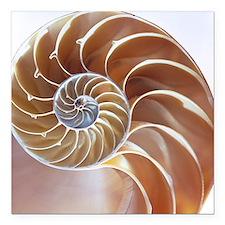 Nautilus shell - Square Car Magnet 3