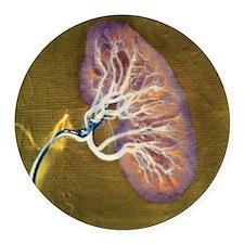 Kidney blood supply - Round Car Magnet