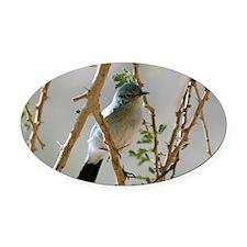 Blackstart in a tree - Oval Car Magnet
