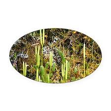 Lycopodium clavatum - Oval Car Magnet