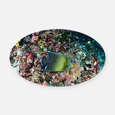 Koran angelfish - Oval Car Magnet