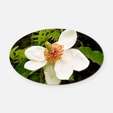Magnolia x wiesneri - Oval Car Magnet