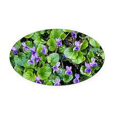 Viola odorata (Sweet Violets) - Oval Car Magnet
