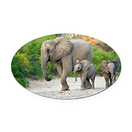 Desert-adapted elephants - Oval Car Magnet