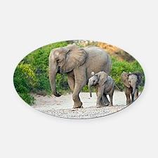 Desert-adapted elephants - Oval Car Magnet