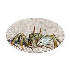Horned ghost crab - Oval Car Magnet
