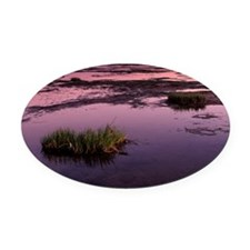 Mud flats at low tide - Oval Car Magnet