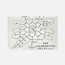Chlorophyll Rectangle Magnet