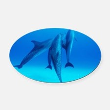 Atlantic spotted dolphins - Oval Car Magnet