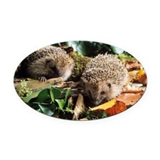 Baby hedgehogs - Oval Car Magnet