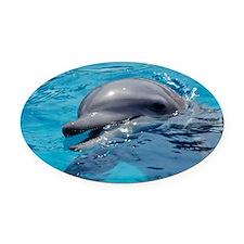 Bottlenose dolphin - Oval Car Magnet