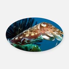 Broadclub cuttlefish - Oval Car Magnet