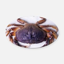 Dungeness crab - Oval Car Magnet