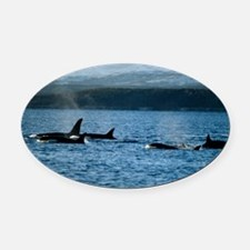Killer whales - Oval Car Magnet
