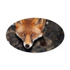 Red fox - Oval Car Magnet