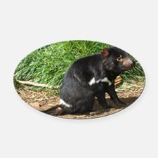Tasmanian devil - Oval Car Magnet