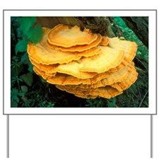 Bracket polypore fungi - Yard Sign