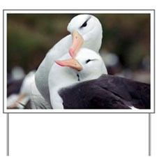 Black-browed albatrosses courting - Yard Sign