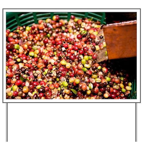 Coffee beans - Yard Sign