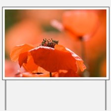 Common poppies (Papaver rhoeas) - Yard Sign
