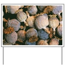 Dried opium poppies - Yard Sign