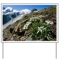 Edelweiss and glacier - Yard Sign