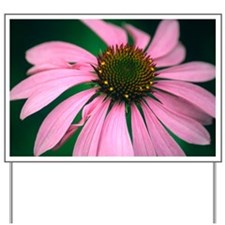 Echinacea purpurea flower - Yard Sign