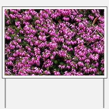 Heather 'Christine Fletcher' flowers - Yard Sign