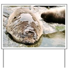 Southern elephant seal moulting - Yard Sign