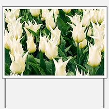 Tulipa 'Velvet Moon' - Yard Sign