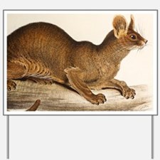 1835 Fossa Crytoprocta by Edward Lear - Yard Sign