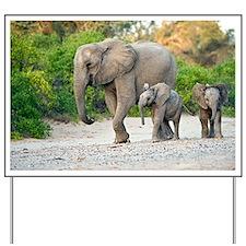 Desert-adapted elephants - Yard Sign
