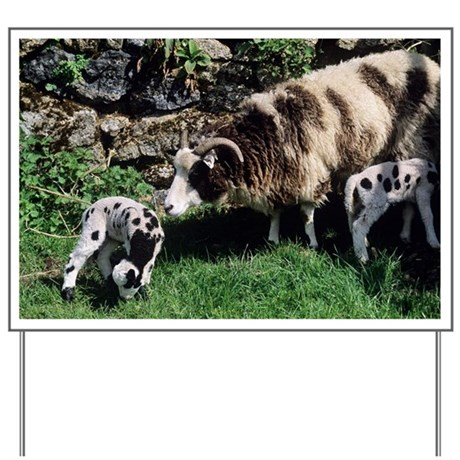 Jacob sheep - Yard Sign