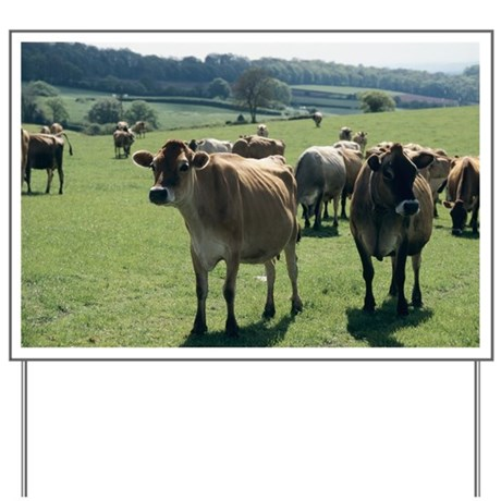 Jersey cows - Yard Sign