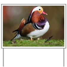 Male mandarin duck - Yard Sign