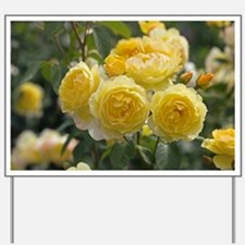 Rose (Rosa 'Charlotte Auspoly') - Yard Sign