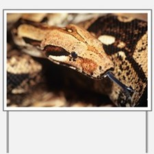 Boa constrictor - Yard Sign