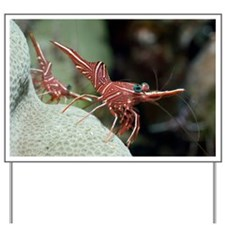 Hingebeak shrimp on a reef - Yard Sign
