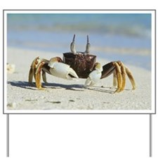 Horned ghost crab - Yard Sign