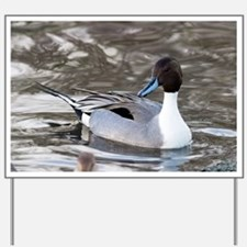 Male pintail - Yard Sign