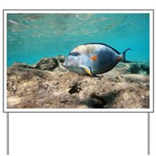 Sohal surgeonfish - Yard Sign