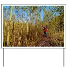 Willow grown for bioenergy - Yard Sign