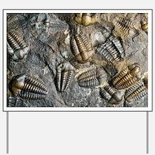 Trilobite fossils - Yard Sign