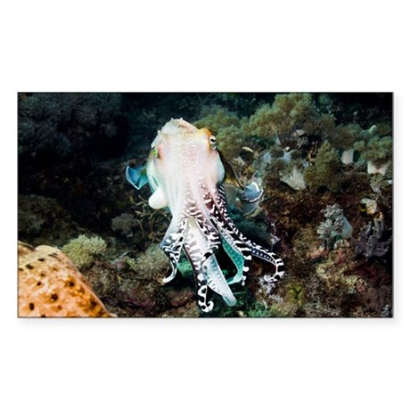 Broadclub cuttlefish male - Sticker (Rectangle)