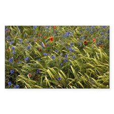 Cornfield meadow in France - Decal