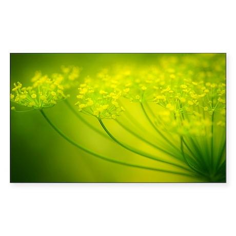 Dill (Anethum graveolens) - Sticker (Rectangle)