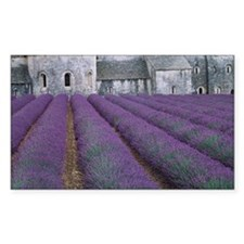 Field of lavender - Decal