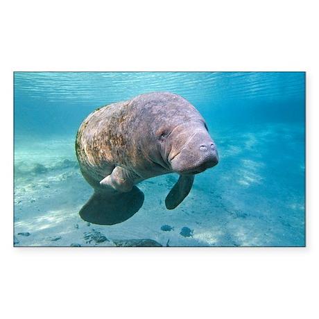 Florida manatee swimming - Sticker (Rectangle)