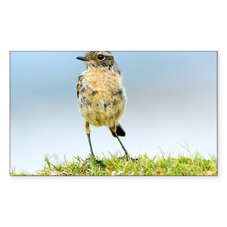 Juvenile whinchat decal by sciencephotos for Stickers juveniles