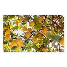 Lemons - Decal